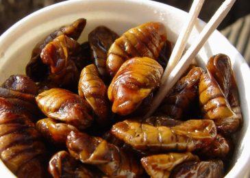 Món ăn kì quặc của ẩm thực Hàn Quốc