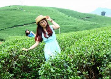 Lý do khiến Nghệ An trở nên cực hút khách vào dịp Tết